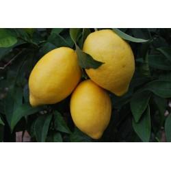 Caja 12 Kg de naranjas y 3...